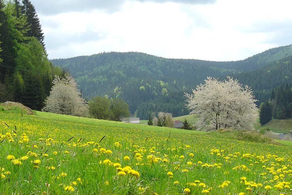 Haus Linda, Frühling Stimmung
