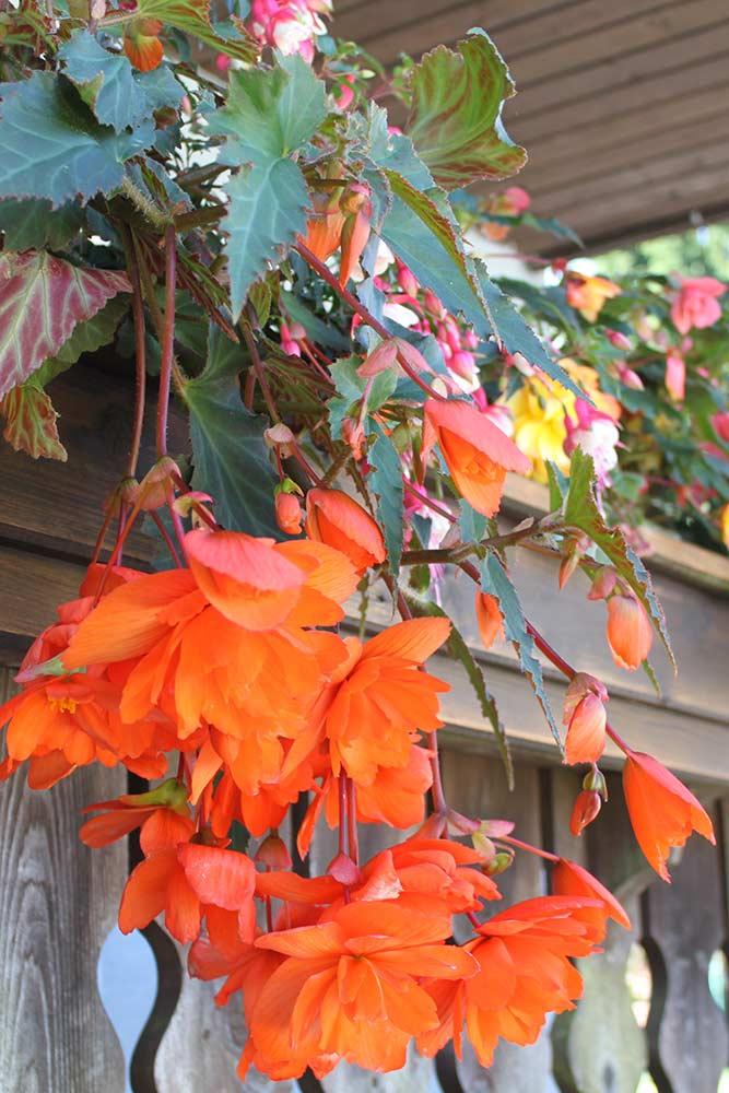 Haus Linda Blumen