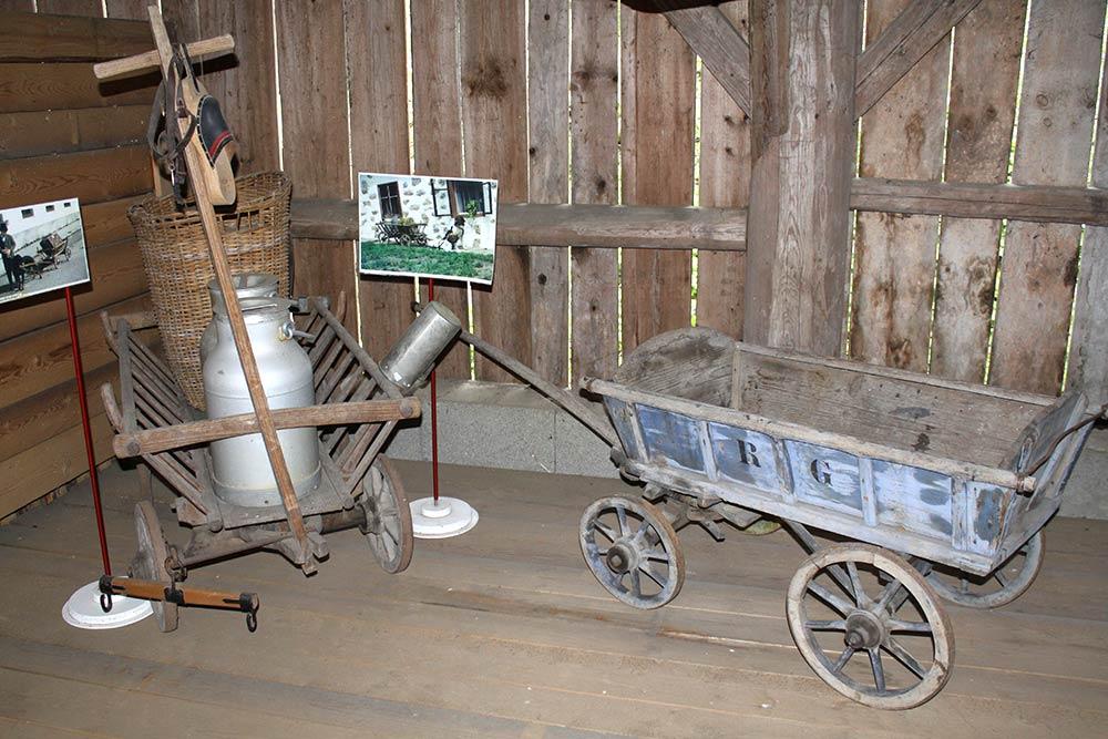 Museum-Zughunde