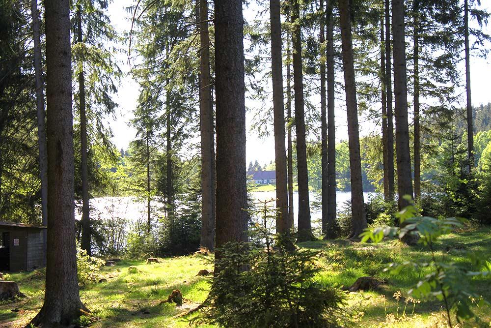 Bärnkopf Stimmung Wald