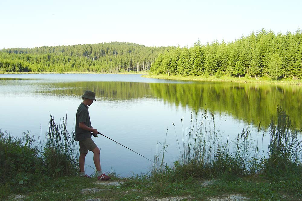 Bärnkopf Stimmung Teich Sommer