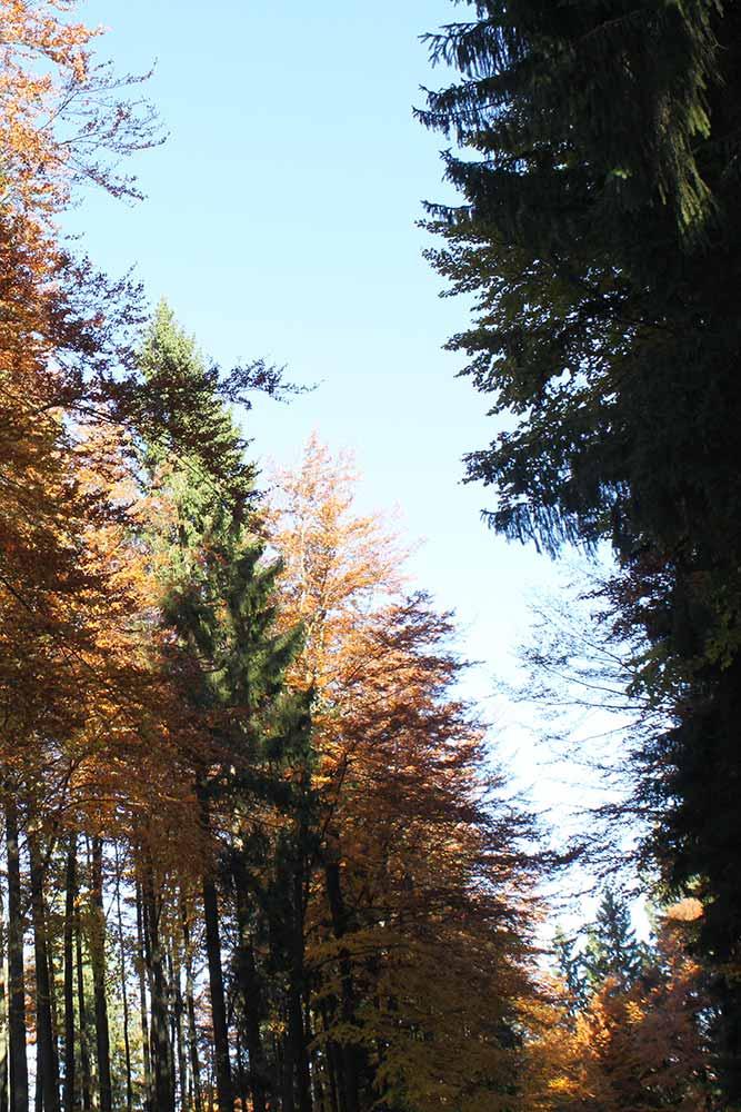 Haus Linda, Herbst Stimmung